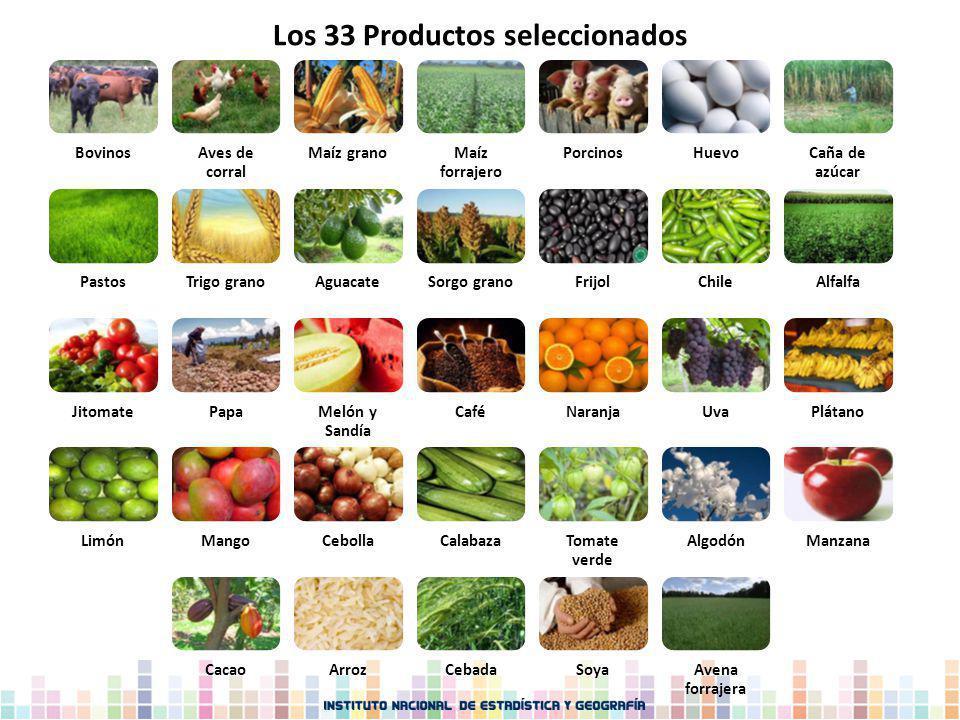 Los 33 Productos seleccionados BovinosAves de corral Maíz granoMaíz forrajero PorcinosHuevoCaña de azúcar PastosTrigo granoAguacateSorgo granoFrijolCh
