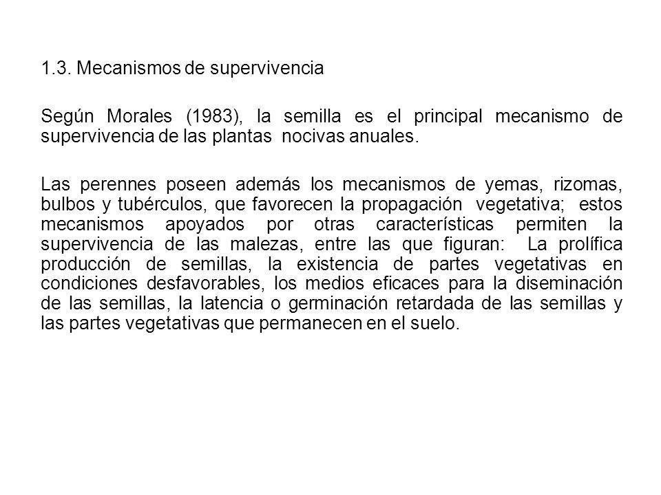 1.3. Mecanismos de supervivencia Según Morales (1983), la semilla es el principal mecanismo de supervivencia de las plantas nocivas anuales. Las peren