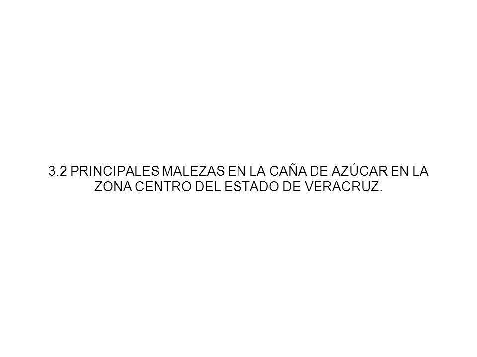 3.2 PRINCIPALES MALEZAS EN LA CAÑA DE AZÚCAR EN LA ZONA CENTRO DEL ESTADO DE VERACRUZ.