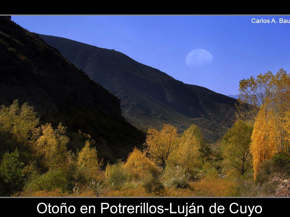 Carlos A. Bau Viñedos de Vistalba-Luján de Cuyo