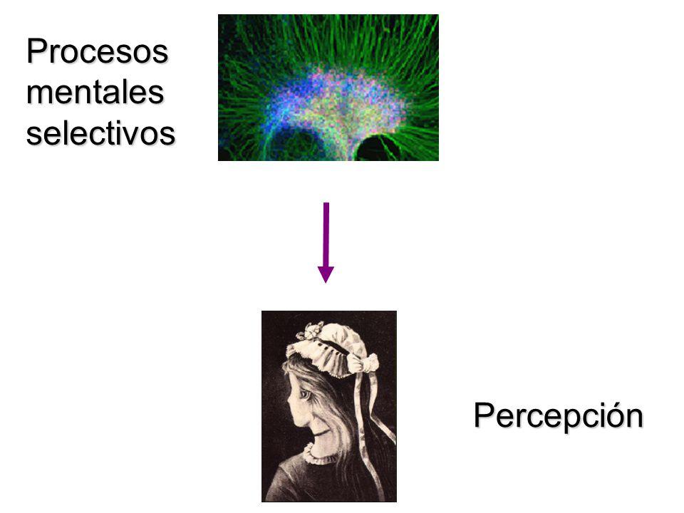 Procesos mentales selectivos Percepción