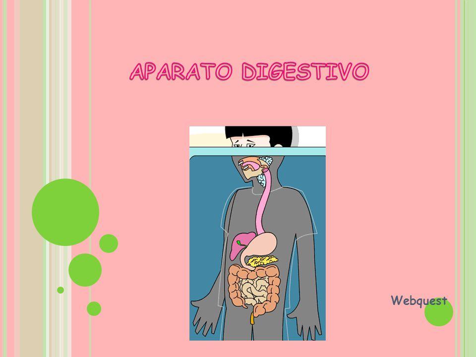 El aparato digestivo es el encargado de transformar los alimentos en sustancias más sencillas para que puedan ser absorbidos, utilizados y de eliminar los restos no digeridos.