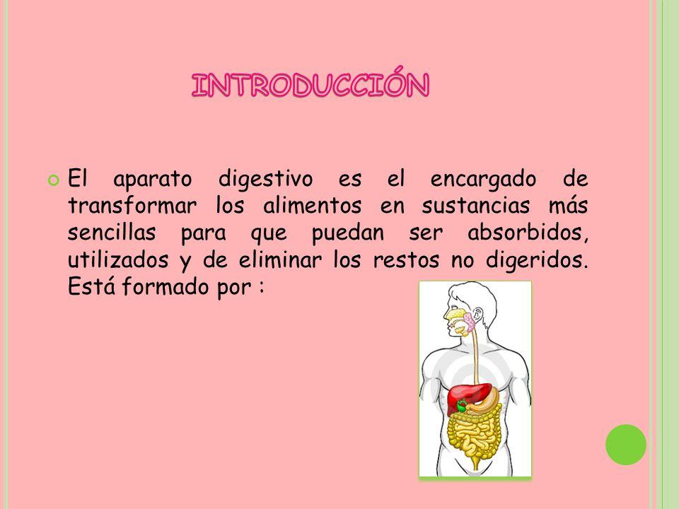 El aparato digestivo es el encargado de transformar los alimentos en sustancias más sencillas para que puedan ser absorbidos, utilizados y de eliminar