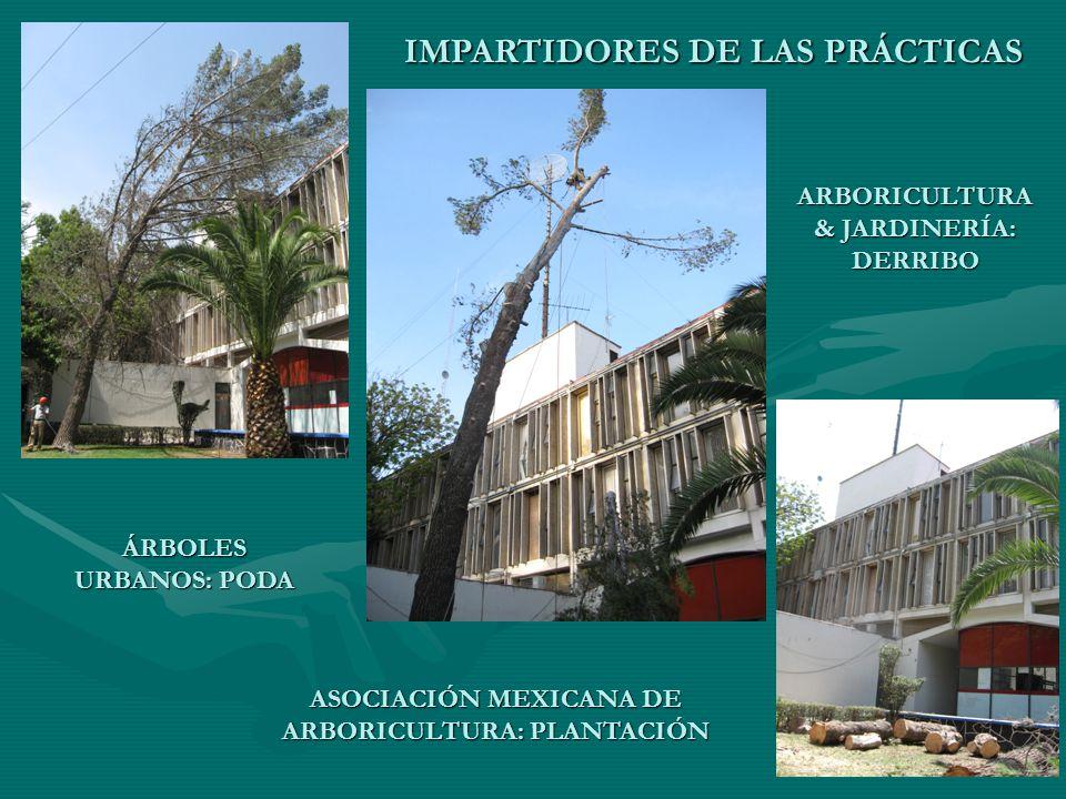 IMPARTIDORES DE LAS PRÁCTICAS ARBORICULTURA & JARDINERÍA: DERRIBO ÁRBOLES URBANOS: PODA ASOCIACIÓN MEXICANA DE ARBORICULTURA: PLANTACIÓN
