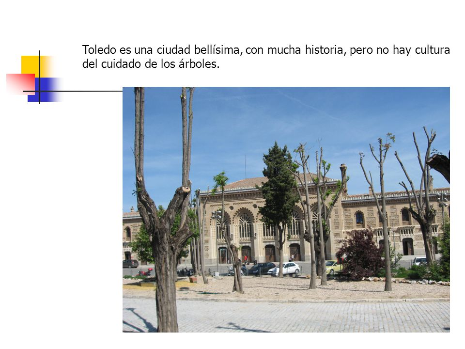 Toledo es una ciudad bellísima, con mucha historia, pero no hay cultura del cuidado de los árboles.