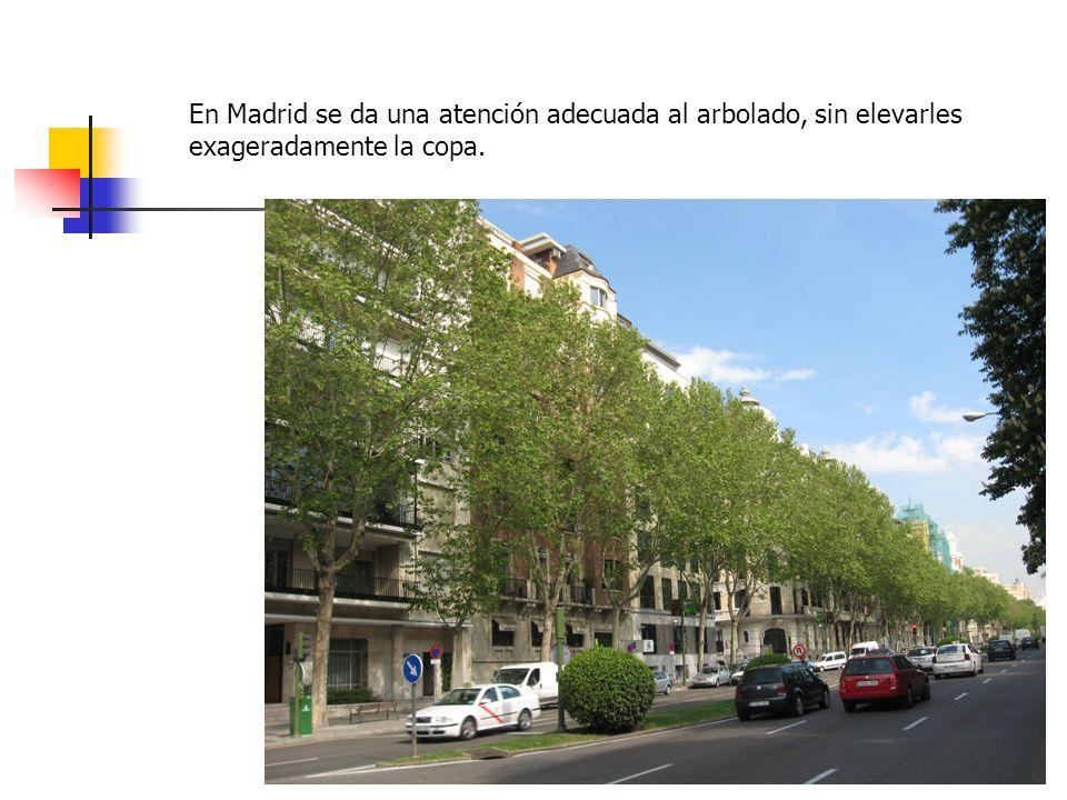 En Madrid se da una atención adecuada al arbolado, sin elevarles exageradamente la copa.
