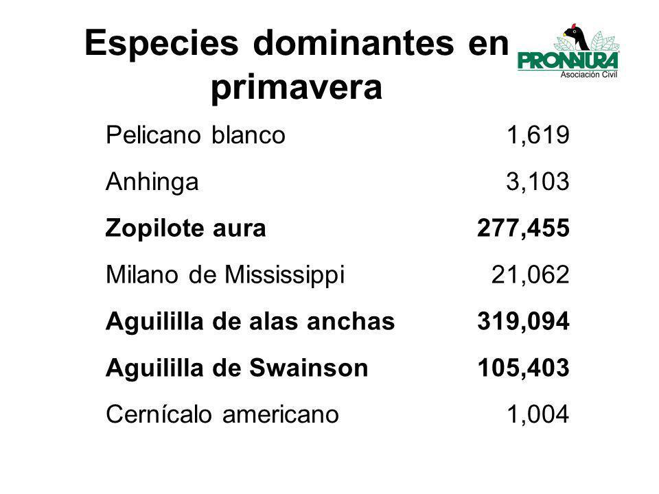 Especies dominantes en primavera Pelicano blanco1,619 Anhinga3,103 Zopilote aura277,455 Milano de Mississippi21,062 Aguililla de alas anchas319,094 Aguililla de Swainson105,403 Cernícalo americano1,004