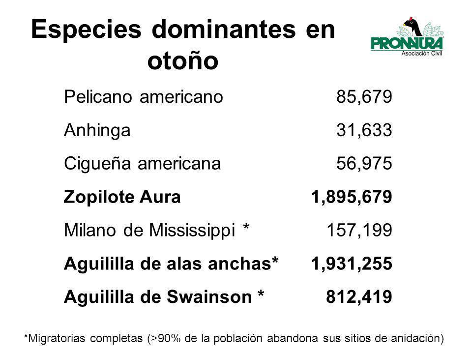 Especies dominantes en otoño Pelicano americano85,679 Anhinga31,633 Cigueña americana56,975 Zopilote Aura1,895,679 Milano de Mississippi *157,199 Aguililla de alas anchas*1,931,255 Aguililla de Swainson *812,419 *Migratorias completas (>90% de la población abandona sus sitios de anidación)