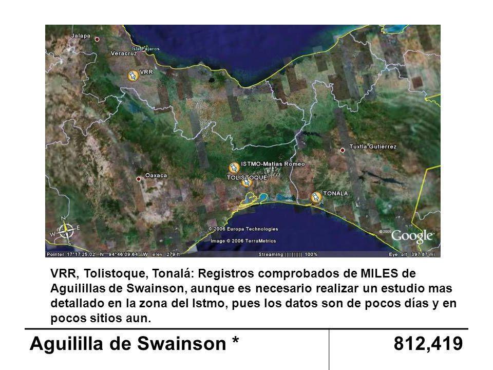 Aguililla de Swainson *812,419 VRR, Tolistoque, Tonalá: Registros comprobados de MILES de Aguilillas de Swainson, aunque es necesario realizar un estudio mas detallado en la zona del Istmo, pues los datos son de pocos días y en pocos sitios aun.