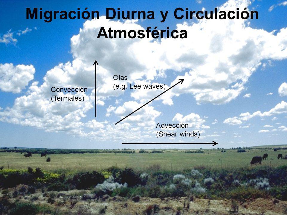 Migración Diurna y Circulación Atmosférica Advección (Shear winds) Convección (Termales) Olas (e.g.
