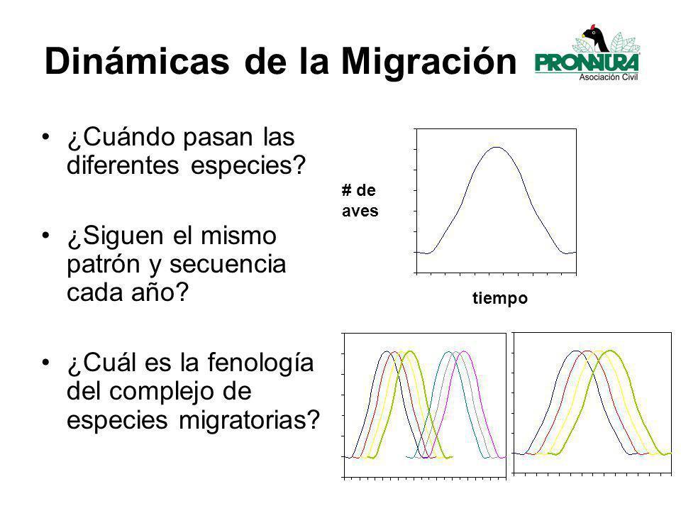 Dinámicas de la Migración ¿Cuándo pasan las diferentes especies.