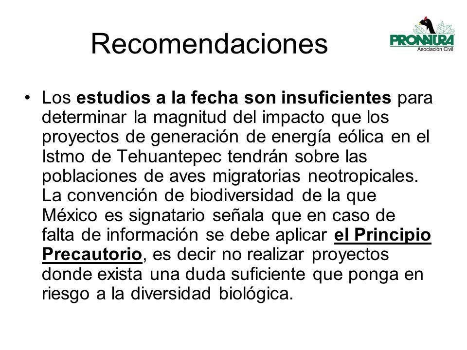 Los estudios a la fecha son insuficientes para determinar la magnitud del impacto que los proyectos de generación de energía eólica en el Istmo de Tehuantepec tendrán sobre las poblaciones de aves migratorias neotropicales.