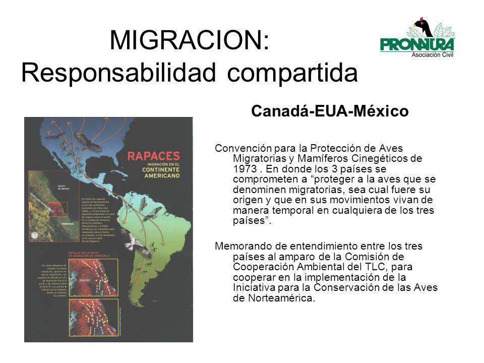 MIGRACION: Responsabilidad compartida Convención para la Protección de Aves Migratorias y Mamíferos Cinegéticos de 1973.