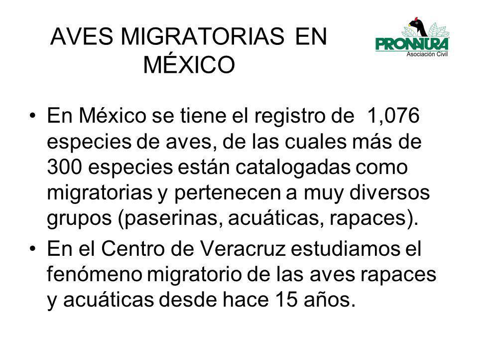 En las 2 estaciones, las aves migratorias de manera individual, presentan una gran variación en los patrones de distribución.
