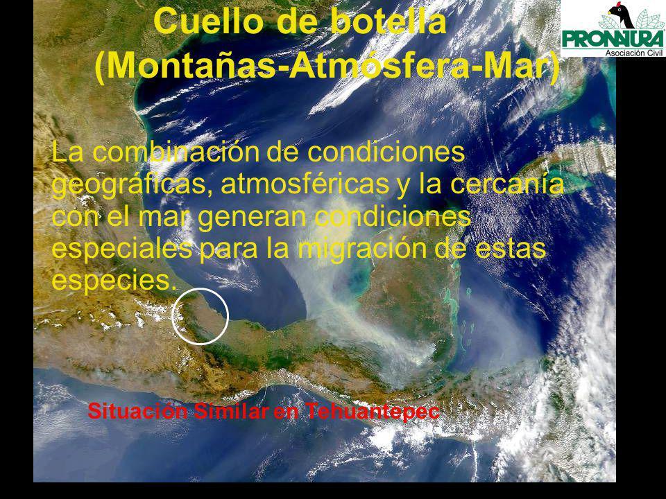 La combinación de condiciones geográficas, atmosféricas y la cercanía con el mar generan condiciones especiales para la migración de estas especies.