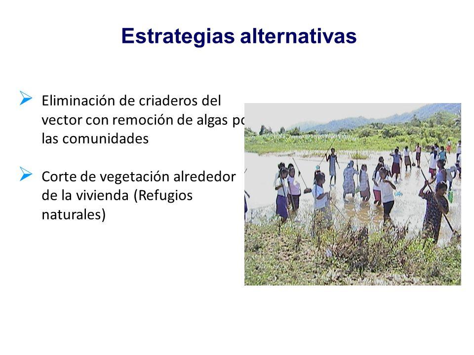 Eliminación de criaderos del vector con remoción de algas por las comunidades Corte de vegetación alrededor de la vivienda (Refugios naturales) Estrat