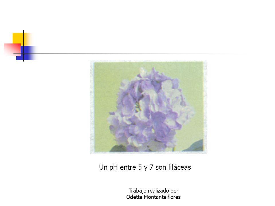 Trabajo realizado por Odette Montante flores Un pH entre 5 y 7 son liláceas