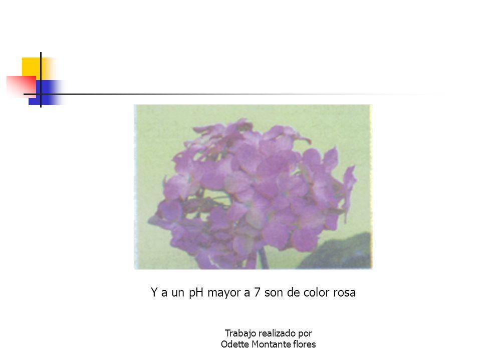 Trabajo realizado por Odette Montante flores Y a un pH mayor a 7 son de color rosa