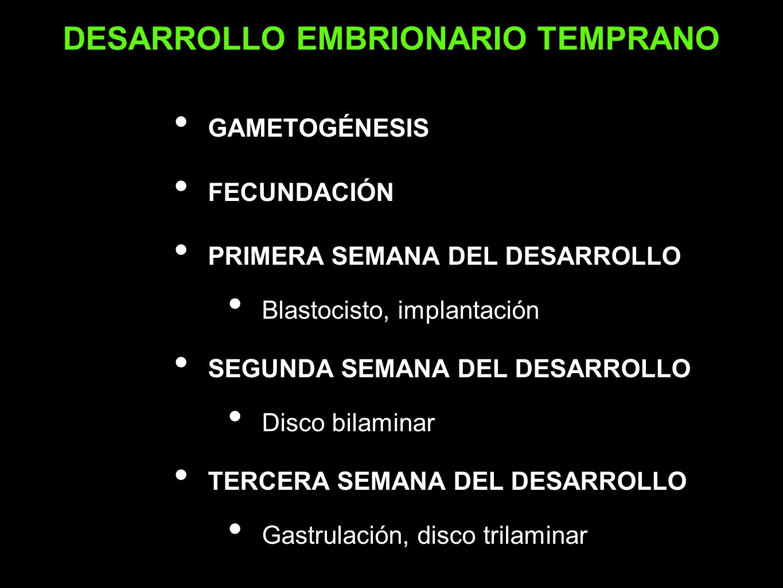 GAMETOGÉNESIS FECUNDACIÓN PRIMERA SEMANA DEL DESARROLLO Blastocisto, implantación SEGUNDA SEMANA DEL DESARROLLO Disco bilaminar TERCERA SEMANA DEL DES