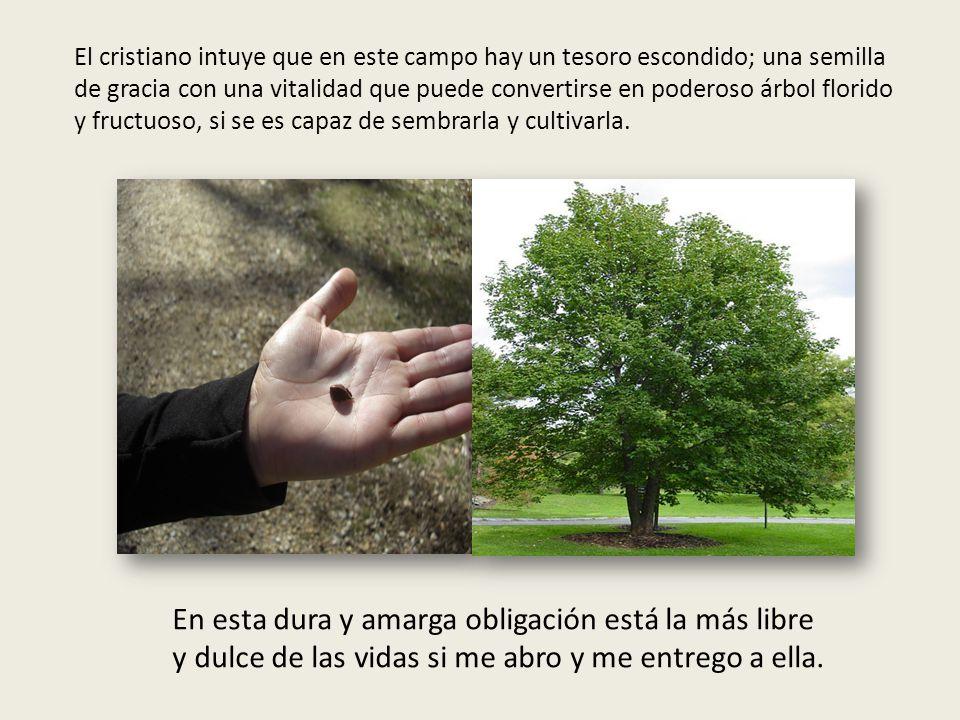 El cristiano intuye que en este campo hay un tesoro escondido; una semilla de gracia con una vitalidad que puede convertirse en poderoso árbol florido