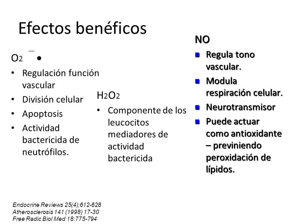 Efectos benéficos O 2 Regulación función vascular División celular Apoptosis Actividad bactericida de neutrófilos. H 2 O 2 Componente de los leucocito