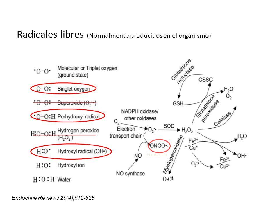 Daño celular a través del exceso de la producción de ROS ROS PROT & LIP ROS APOPTOSIS DNA Modificaciones DNA mitocondrial Inestabilidad genómica y mutaciones Endocrine Reviews 25(4);612-628 (Neuronas) SN