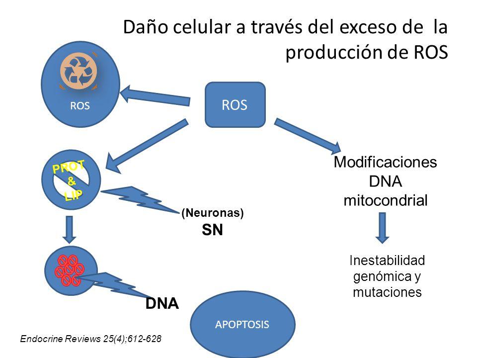 Daño celular a través del exceso de la producción de ROS ROS PROT & LIP ROS APOPTOSIS DNA Modificaciones DNA mitocondrial Inestabilidad genómica y mut