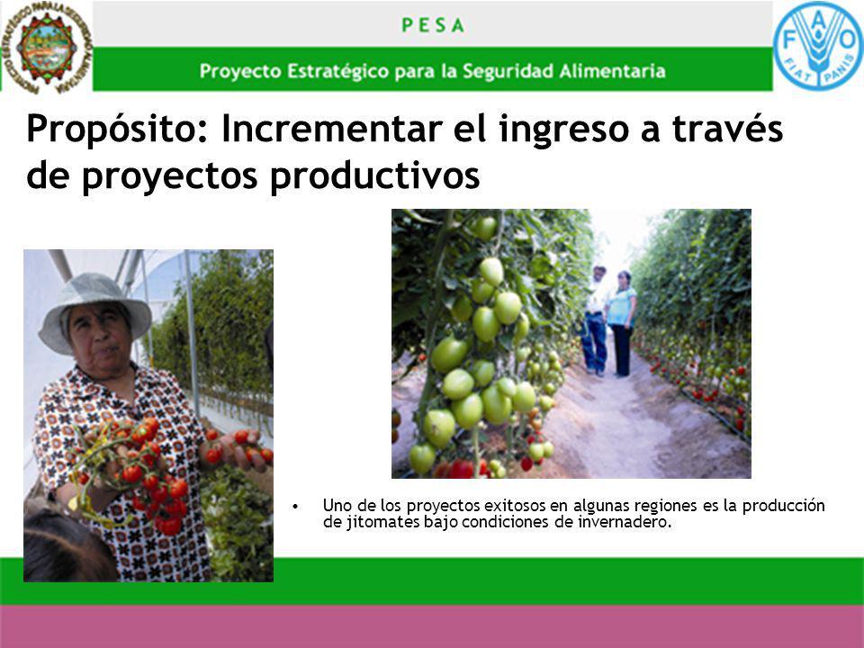 Propósito: Incrementar el ingreso a través de proyectos productivos Uno de los proyectos exitosos en algunas regiones es la producción de jitomates ba