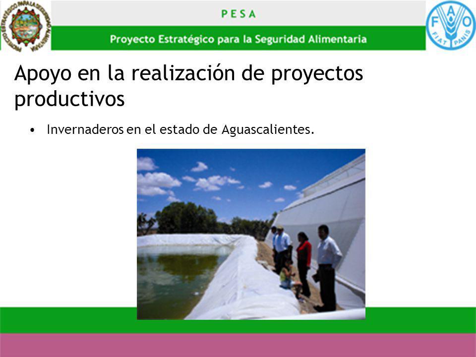 Apoyo en la realización de proyectos productivos Invernaderos en el estado de Aguascalientes.