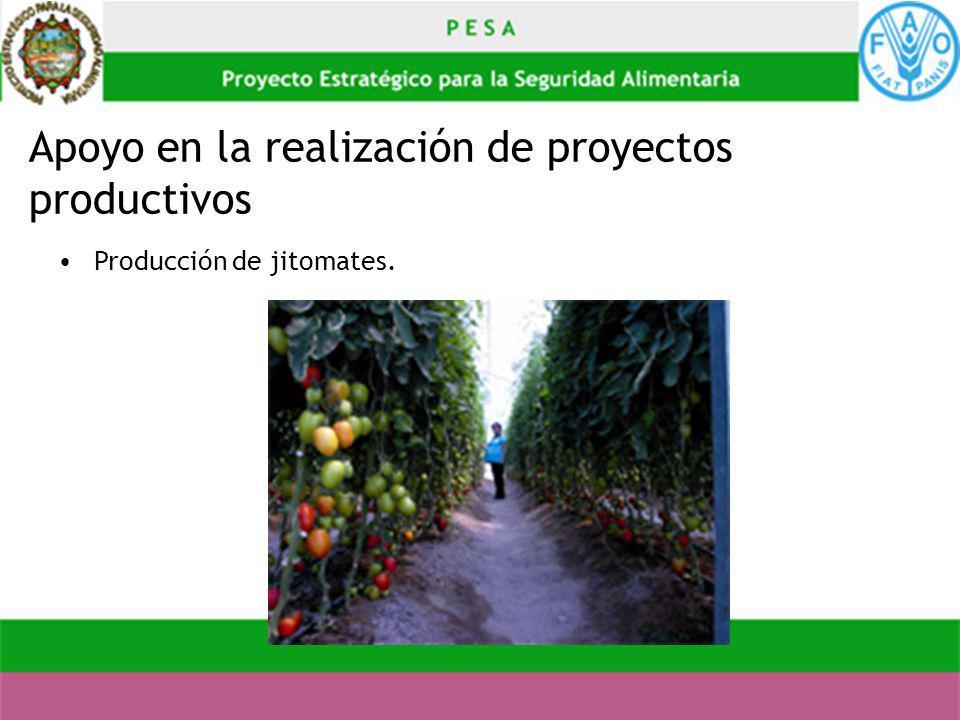 Apoyo en la realización de proyectos productivos Producción de jitomates.