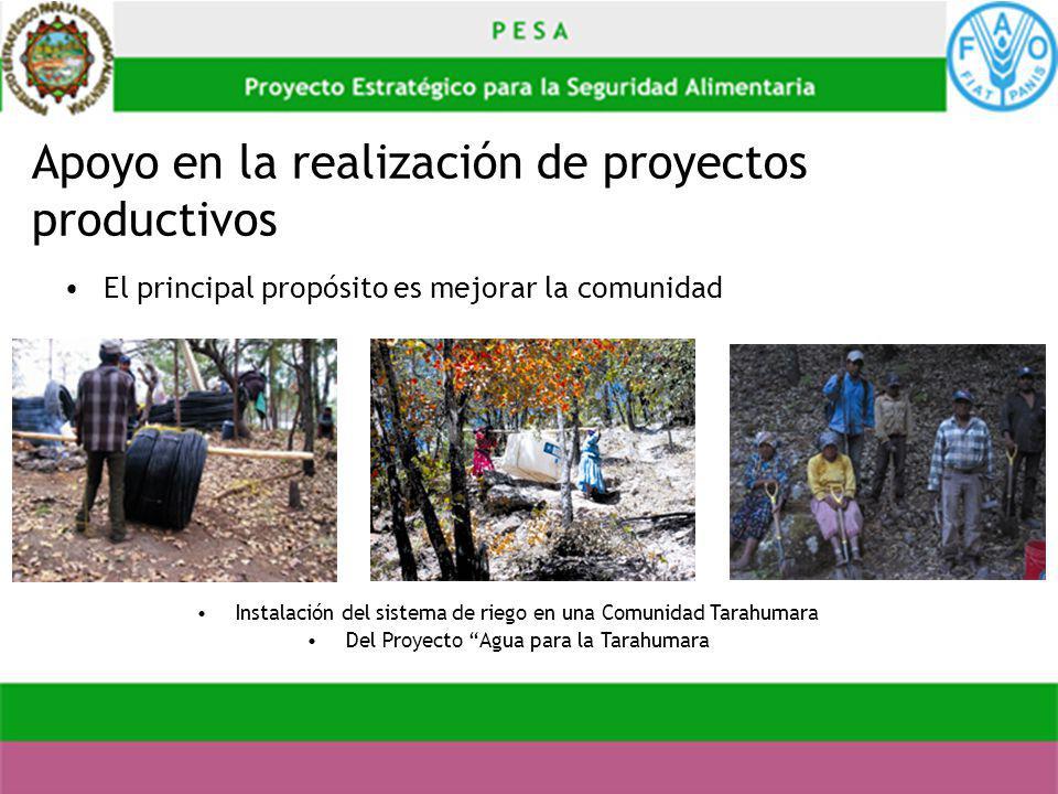 Apoyo en la realización de proyectos productivos El principal propósito es mejorar la comunidad Instalación del sistema de riego en una Comunidad Tara