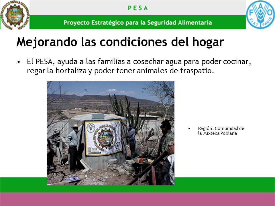 Mejorando las condiciones del hogar El PESA, ayuda a las familias a cosechar agua para poder cocinar, regar la hortaliza y poder tener animales de tra