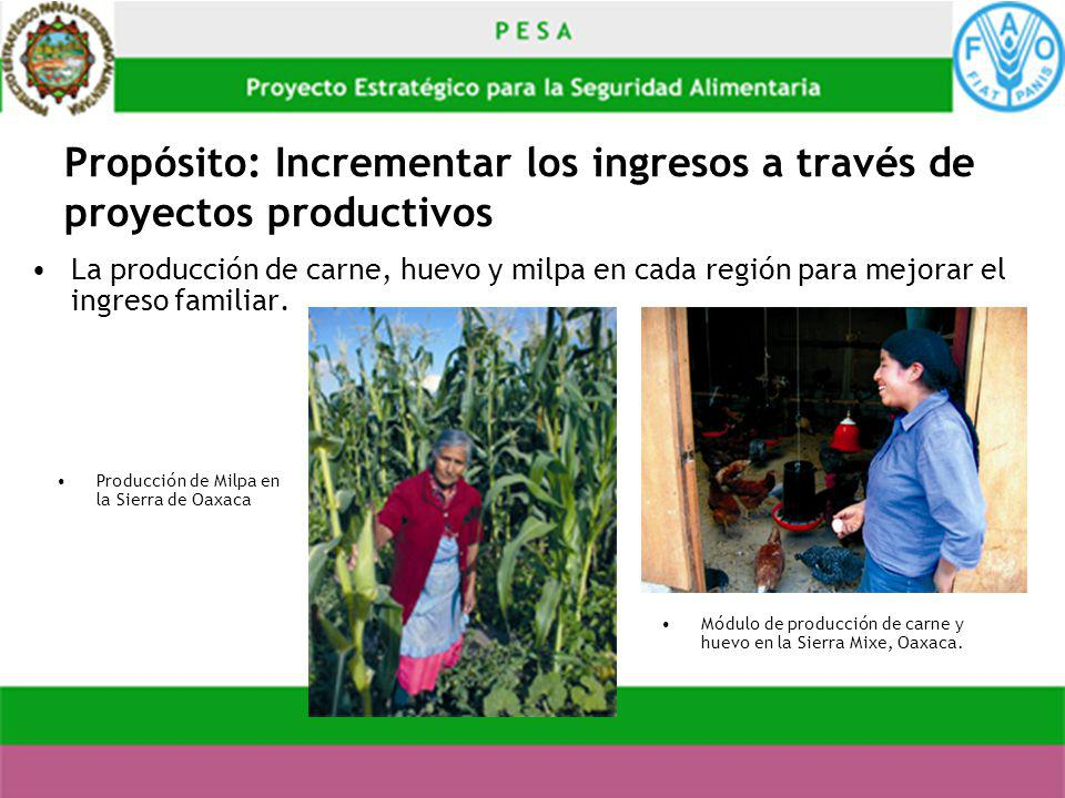 Propósito: Incrementar los ingresos a través de proyectos productivos La producción de carne, huevo y milpa en cada región para mejorar el ingreso fam