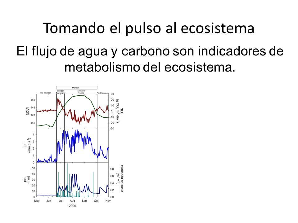 Tomando el pulso al ecosistema El flujo de agua y carbono son indicadores de metabolismo del ecosistema.