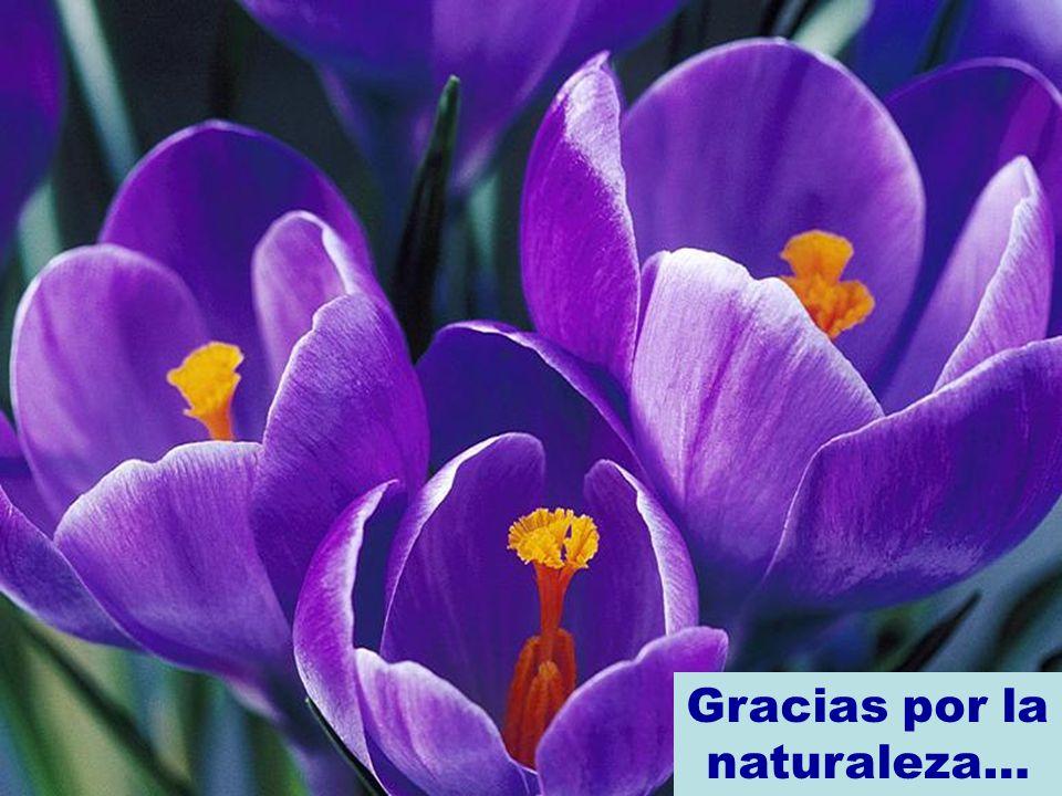 Gracias por la naturaleza…
