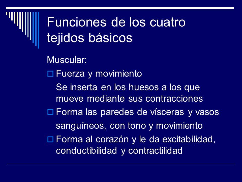 Funciones de los cuatro tejidos básicos Conectivo: Recubre órganos, rellena espacios une estructuras y les proporciona sostén forma al esqueleto óseo y cartilaginoso forma a las células de la sangre Protege al sistema nervioso