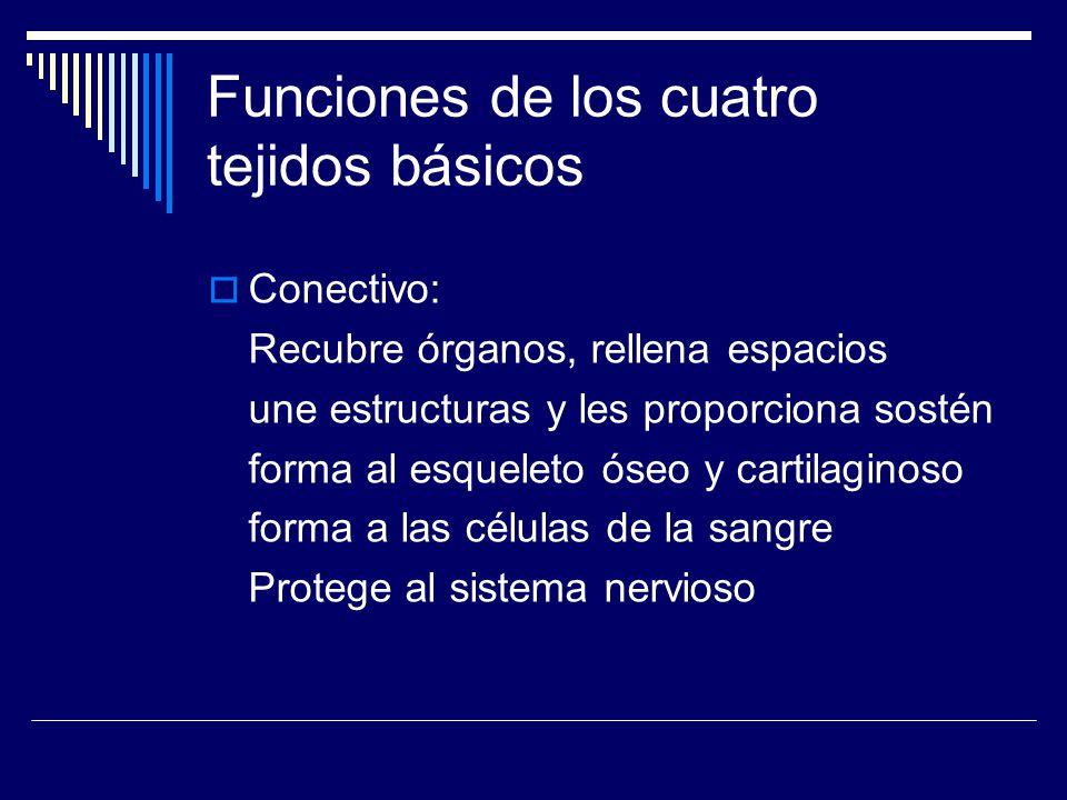 Funciones de los cuatro tejidos básicos Nervioso: Recibe los diversos estímulos internos y externos y los conduce a centros superiores Integra e interpreta la información recibida Envía impulsos nerviosos a músculos y glándulas para generar respuestas