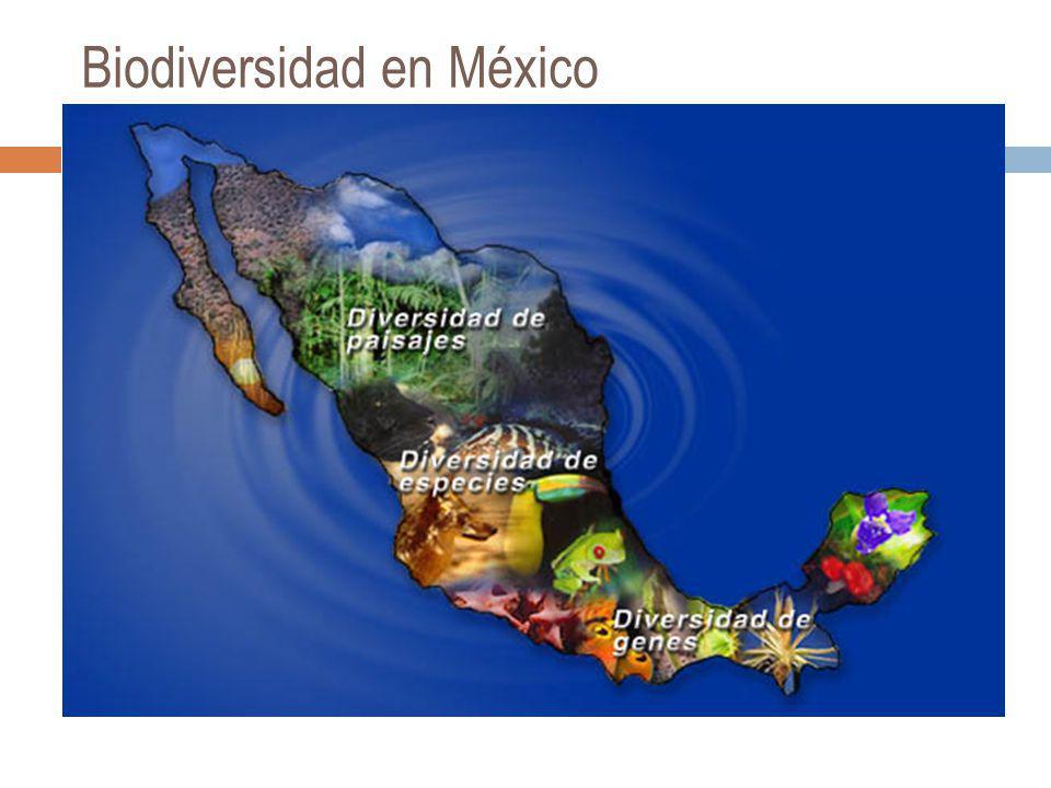 Legislación Nacional Ley General de Equilibrio Ecológico y la protección al ambiente.