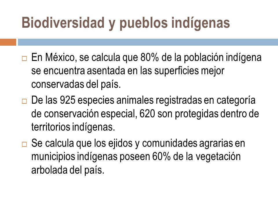 Biodiversidad y pueblos indígenas En México, se calcula que 80% de la población indígena se encuentra asentada en las superficies mejor conservadas de