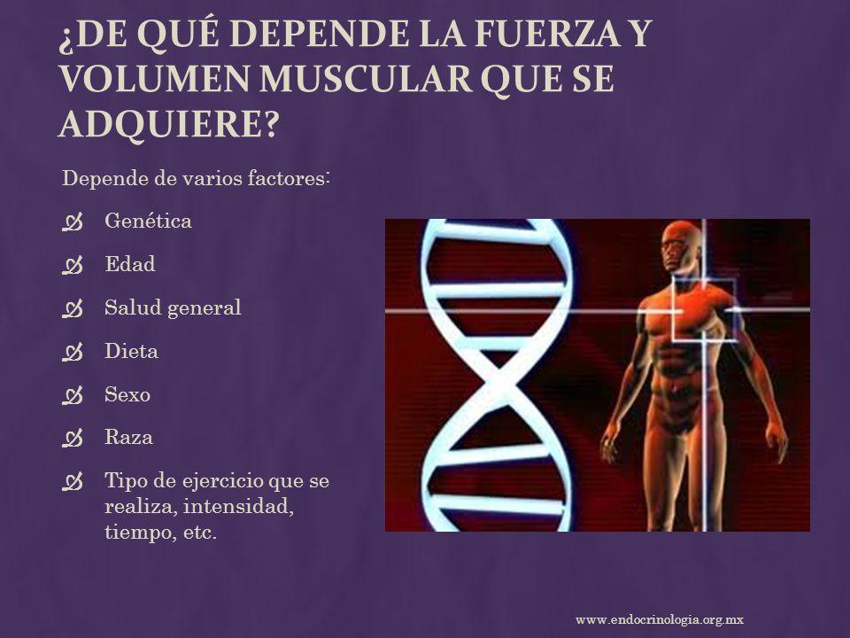 ¿DE QUÉ DEPENDE LA FUERZA Y VOLUMEN MUSCULAR QUE SE ADQUIERE? Depende de varios factores: Genética Edad Salud general Dieta Sexo Raza Tipo de ejercici