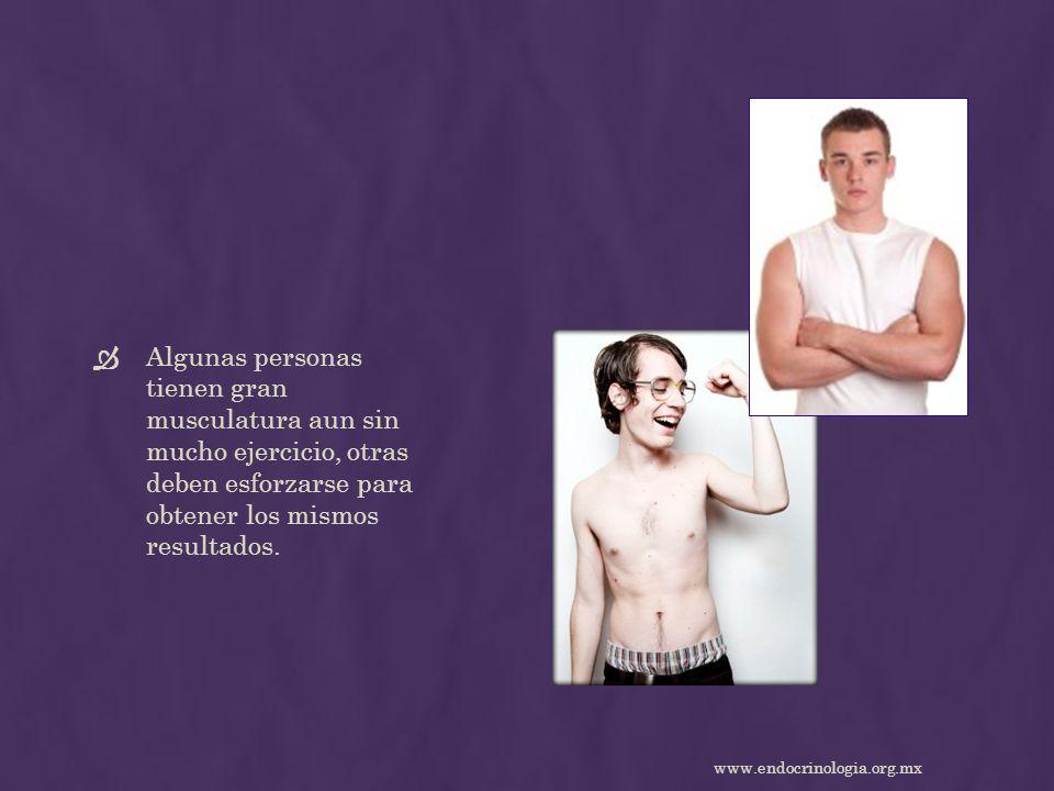 Algunas personas tienen gran musculatura aun sin mucho ejercicio, otras deben esforzarse para obtener los mismos resultados. www.endocrinologia.org.mx