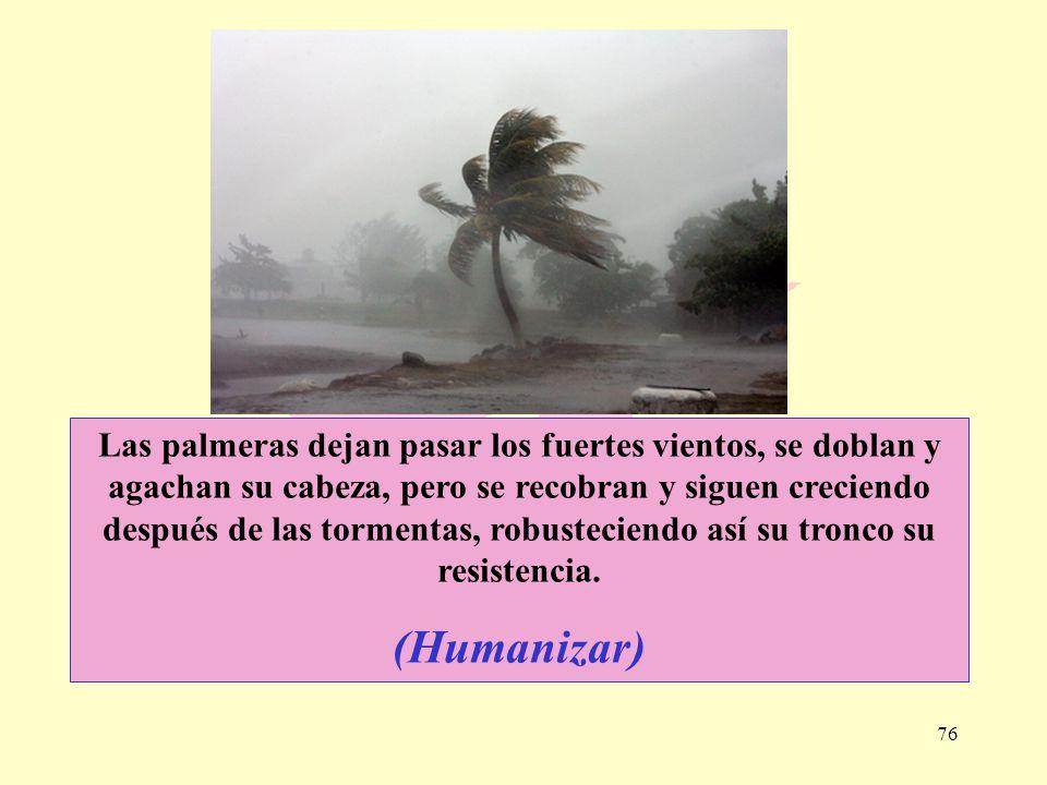76 Las palmeras dejan pasar los fuertes vientos, se doblan y agachan su cabeza, pero se recobran y siguen creciendo después de las tormentas, robustec