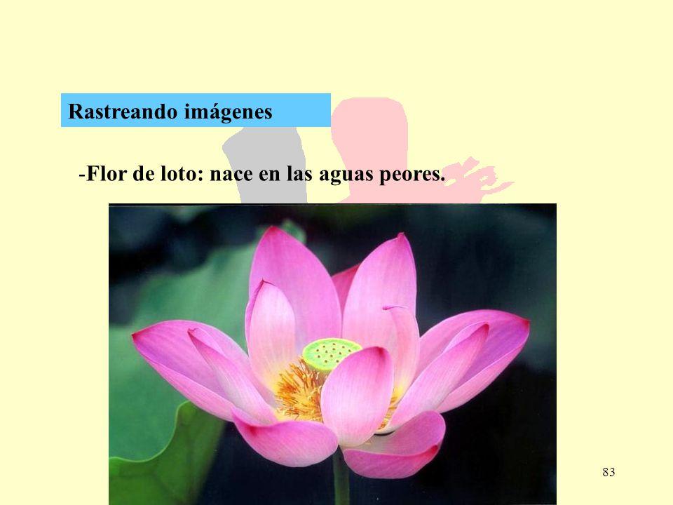 83 -Flor de loto: nace en las aguas peores. Rastreando imágenes