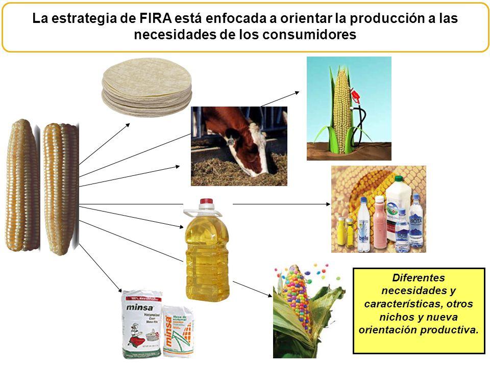 Diferentes necesidades y características, otros nichos y nueva orientación productiva. La estrategia de FIRA está enfocada a orientar la producción a