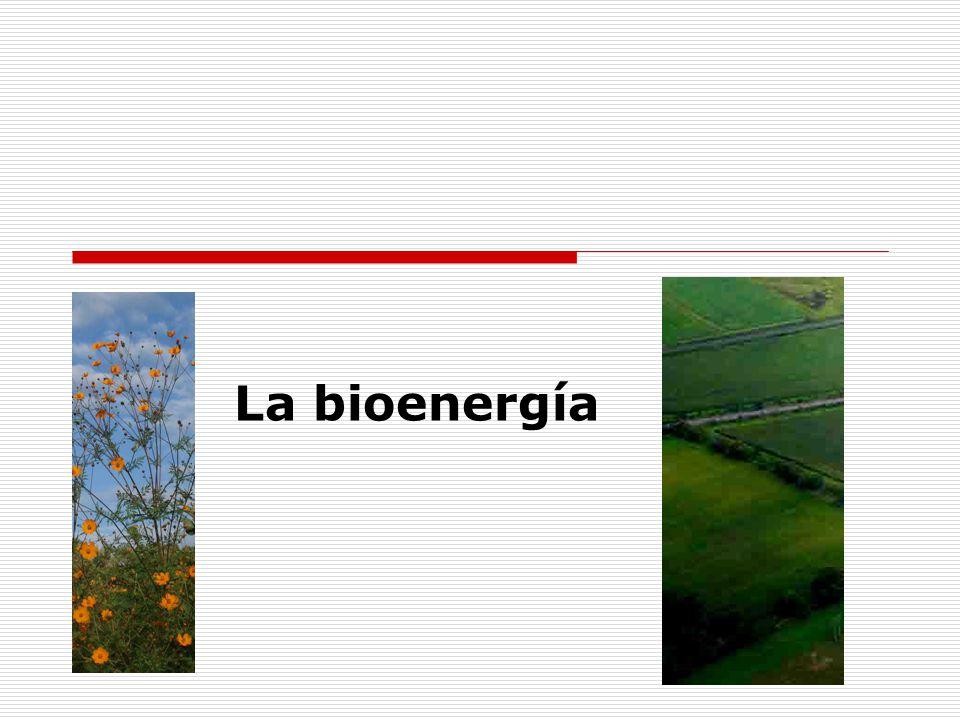 La bioenergía