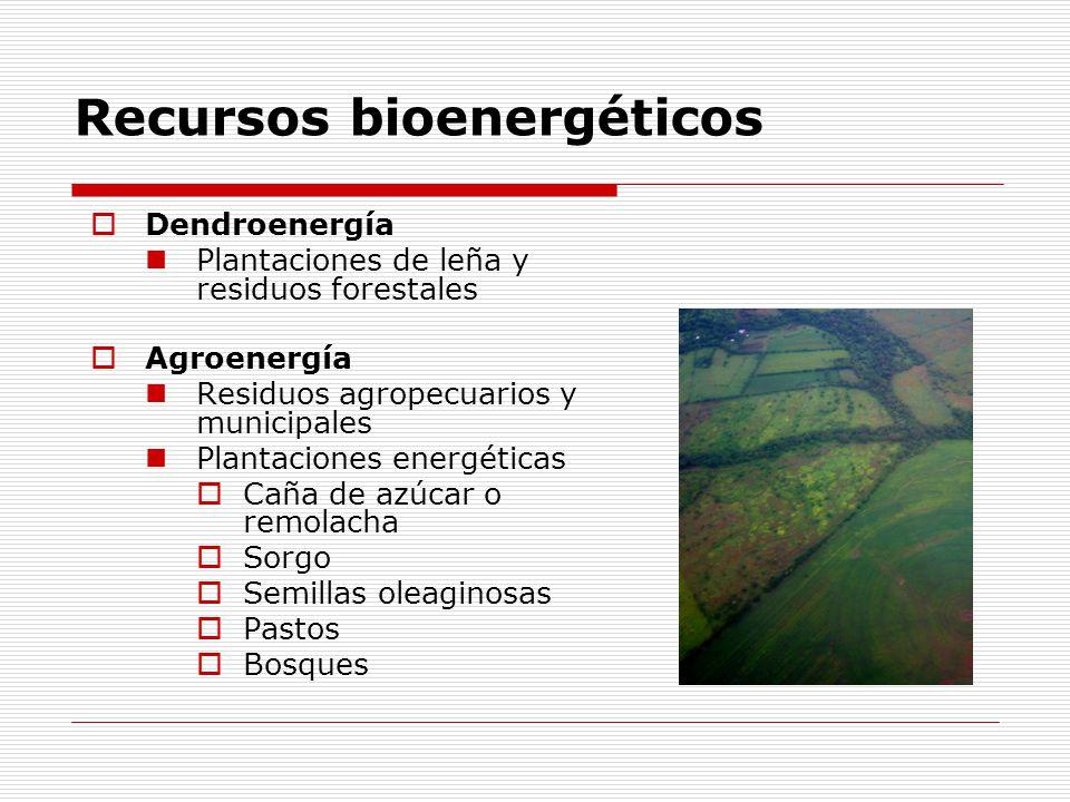 Recursos bioenergéticos Dendroenergía Plantaciones de leña y residuos forestales Agroenergía Residuos agropecuarios y municipales Plantaciones energéticas Caña de azúcar o remolacha Sorgo Semillas oleaginosas Pastos Bosques
