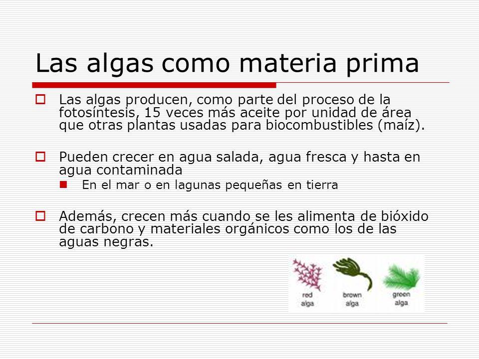 Las algas como materia prima Las algas producen, como parte del proceso de la fotosíntesis, 15 veces más aceite por unidad de área que otras plantas usadas para biocombustibles (maíz).
