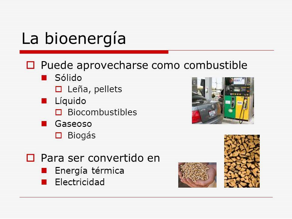 La bioenergía Puede aprovecharse como combustible Sólido Leña, pellets Líquido Biocombustibles Gaseoso Biogás Para ser convertido en Energía térmica Electricidad