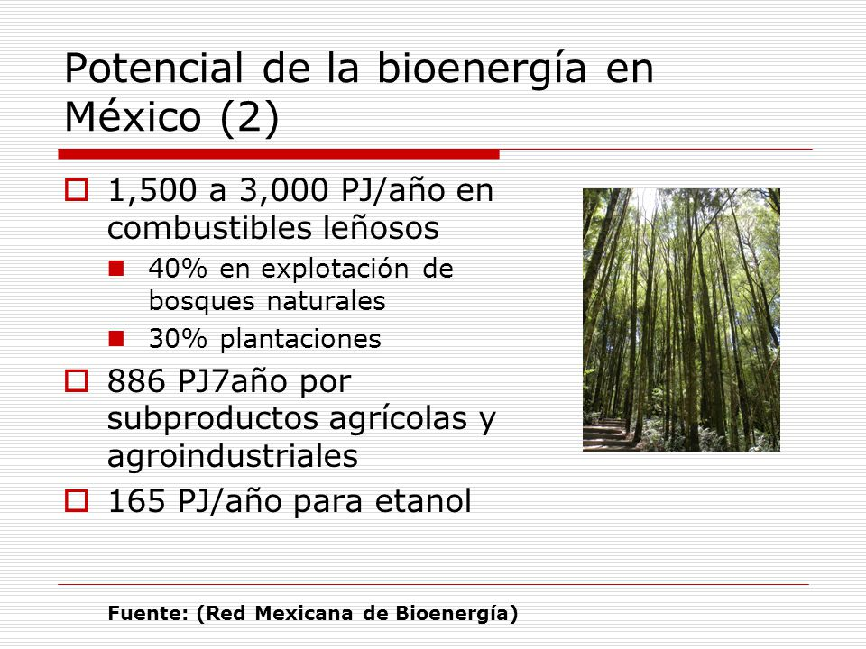 Potencial de la bioenergía en México (2) 1,500 a 3,000 PJ/año en combustibles leñosos 40% en explotación de bosques naturales 30% plantaciones 886 PJ7año por subproductos agrícolas y agroindustriales 165 PJ/año para etanol Fuente: (Red Mexicana de Bioenergía)