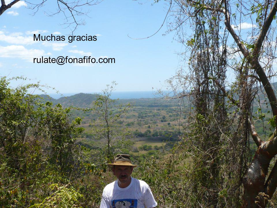 1)El Pago de Servicios Ambientales para conservación de bosques del FONAFIFO reduce deforestación.